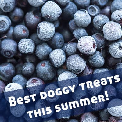frozen blueberries for siberian husky