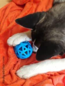 Husky puppy toys
