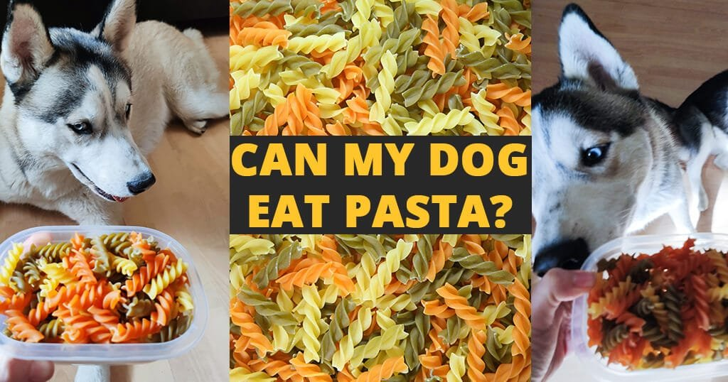 Can my dog eat pasta? - Husky Advisor