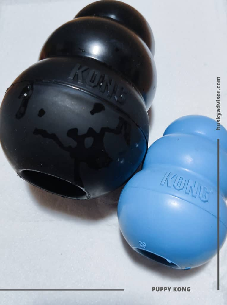 dog KONG toy Extreme Puppy